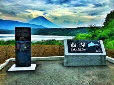 西湖-富士河口湖町-Lyandkoala