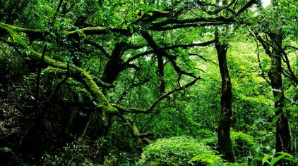 三分石-原始次森林