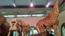 肯尼亚国家博物馆