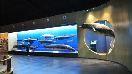 海底世界-鲸馆 (3)