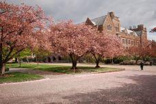 华盛顿大学-西雅图-C年度签约摄影师