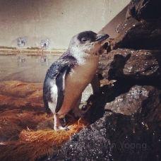 EcoWorld Picton Aquarium-皮克顿