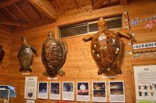 屋久岛海龟博物馆-屋久岛町-Crista旅行进行时