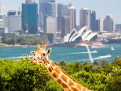 悉尼休闲亲子2日游