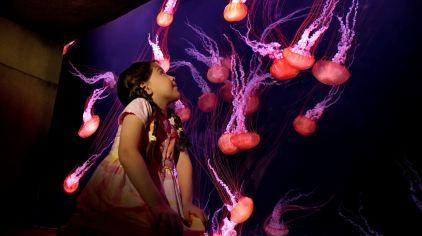 亚特兰蒂斯失落的空间水族馆 the lost chambers aquarium (4)