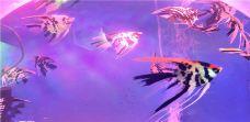 瀚海立方动物王国室内主题公园-宿州