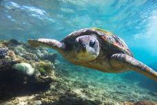 海龟保育中心-霹雳州-Monster31