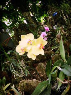 南山植物园-重庆-_WeCh****65259