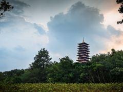 滁州+南京+苏州四日游