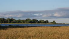 Eastern Neck National Wildlife Refuge-马里兰州