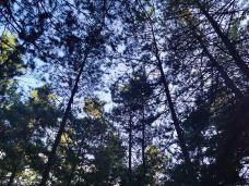 帽儿山国家森林公园-延吉-153****6444