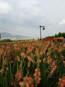 刘家峡恐龙国家地质公园-临夏-yun0630
