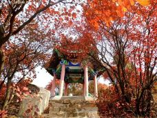 莲华山-济南