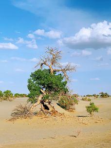 塔克拉玛干沙漠(巴音郭楞)-巴音郭楞-凹凸曼和小伙伴