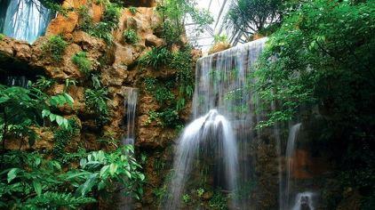 华南植物园 (5)