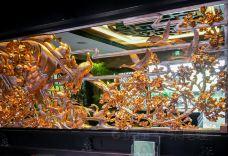 白天鹅宾馆·玉堂春暖餐厅-广州-doris圈圈
