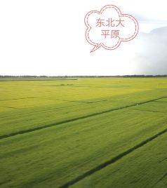 满洲里游记图文-乘高铁闯关东、看东北三省城、游漠河穿草原