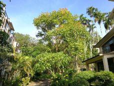 五指山热带雨林风景区-五指山-137****1081