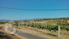 Constable Estate Vineyards