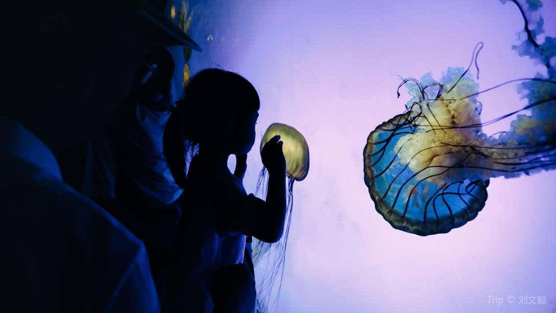 Shanghai Ocean Aquarium Ticket