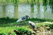 朱鹮自然保护区-洋县-扶疏子