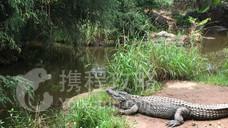 Kwena Crocodile Farm