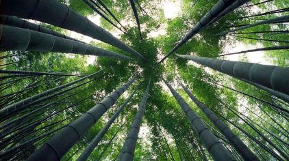 竹洞天风景区4