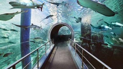 穆鲁拉巴海底世界 7