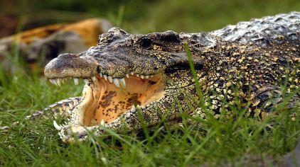 奥兰多鳄鱼岛2
