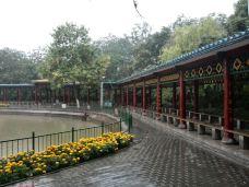 青山公园-石嘴山-君临天下