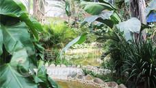 阿尔卡迪亚温泉