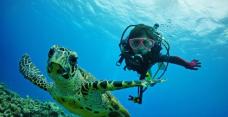 QQ截图20170607134642-Marine House SEASIR夜潜体验(那霸店)-冲绳县-不吃鱼的木子李