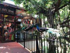 吉隆坡飞禽公园-吉隆坡-pxy0705