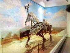阿拉善博物馆-阿拉善-尊敬的会员