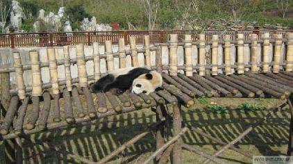 长沙生态动物园21
