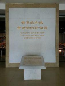古动物化石博物馆-临夏-锦瑟无端少一弦