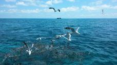 大堡礁-昆士兰-Feifei