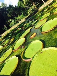 庞普勒斯植物园-毛里求斯-205****019