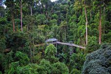 西双版纳热带雨林国家公园望天树景区-西双版纳-doris圈圈