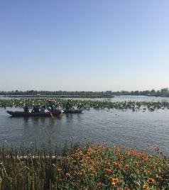 白洋淀游记图文-这个国庆节全家白洋淀,雄县温泉双重奏