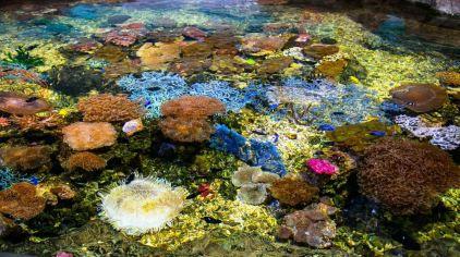 杭州极地海洋公园 (23)