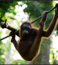西必洛游记图文-猴年出游第一站——亚庇、山打根休闲游