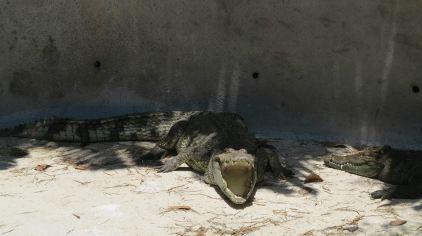 普吉岛动物园 (4)