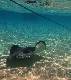 开曼群岛游记图文-Cayman Islands 开曼群岛-幻梦
