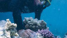 伊瑚鲁岛种珊瑚体验