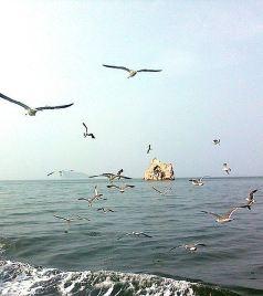 长岛游记图文-风筝的旅行·环游山东14日