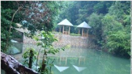 安溪桫椤谷风景区2