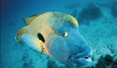 大堡礁-昆士兰-Segancao