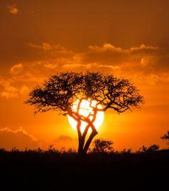 纳库鲁游记图文-【肯尼亚】马塞马拉东非五霸,柏哥利亚湖火烈鸟粉红天堂,东非7天Safari精华美图&拍照小技巧