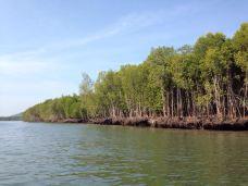 红树林生态保护区-兰卡威-琪玛
